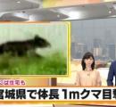 秋田県で人が次々とクマに襲われる。多分同一個体。