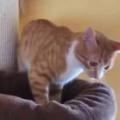 ネコ用ベッドを「キャットタワー」に置いてみた。なんかしっくりこないにゃ → 猫はこうした…
