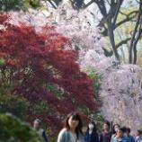 『乾門通り②(4月の花③)』の画像