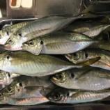 『紀州アジ釣り、サイズがな~(防波堤 in 和歌山 2020/11/28)』の画像