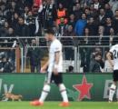 〈画像あり〉イスタンブール名物のネコがピッチに侵入、欧州CLの試合中断