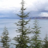 『カスピ海にみる環境破壊と乱獲の縮図』の画像