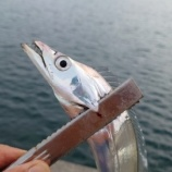 『タチウオ釣り①紀伊国2020.09.26』の画像