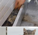 地下道の壁からニャー 秋田で警察官が子猫救出作戦