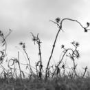 枯れ野の造形
