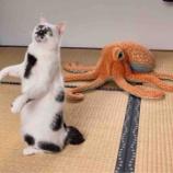 『脱猫背』の画像