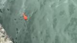 防波堤釣り中のワイ、怒りのウグイ6連発(※画像あり)