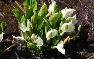 『岡山県立・森林公園の花』の画像