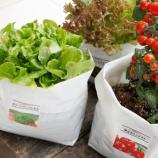 『ベランダで野菜育てたいんだ』の画像