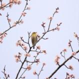 『春の訪れ』の画像