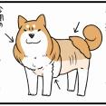 そこだけ残すの?柴犬のこだわりすぎる謎換毛