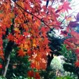 『旧古河庭園』の画像