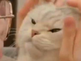 ネコにお姉さんがキスをする。ちゅっ♪ → 猫の顔はこうなります…