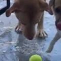 【イヌ】 お気に入りのボールを外に置いていた。昨夜はとっても寒かった → こうなった…