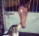 馬と猫が戯れている画像かわええええええええええええ