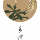 伊藤若冲 若冲の花 カレンダー 2021 先行予約販売開始します。