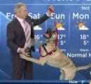 【画像有】カナダ 犬と一緒に天気予報を伝える