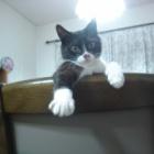 『ネコにも性格はある?記憶はない?用心深い猫が家族になるまで』の画像
