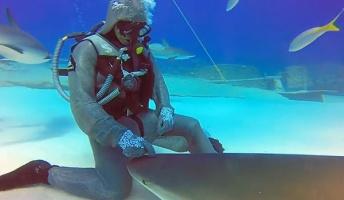 サメに催眠をかける女性ダイバーがスゴイ!凶暴なはずのサメがおとなしくなる