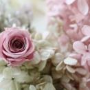 パウダーピンク 小さいお花達
