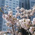函館お写ん歩ブログ