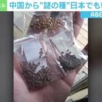 【悲報】アメリカ人、中国から送られてきた『謎の種』を植えてしまう…アメリカ農務当局も見たことが無い植物が育つ