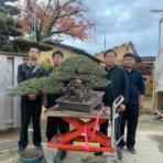 雨竹 盆栽 水石 便り