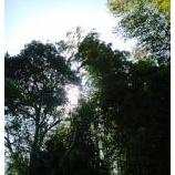 『陽気』の画像