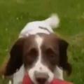 イヌたちは待っていた。おもちゃのロケットが発射する! → 4匹の犬はこうなります…