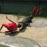 『ワニが大量発生している動物園~Samutprakarn Crocodile Farm and Zoo~』の画像
