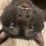寝顔がとてつもなく怖い我が家の黒猫