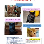 八代ニャンズ助け隊のブログ