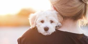飼い主の承諾なしに飼い犬に触れようとする奴が鬱陶しい!