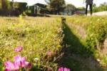 花のどこを食べている?『かたの環境講座』の第3回目フィールドワークが受付中!~私市植物園で10/24(土)開催~