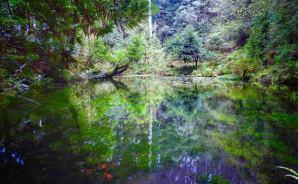 """""""神聖な雰囲気""""な能登半島の池"""