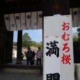 『仁和寺の御室桜』の画像