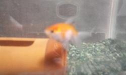 ワイの金魚wwwwwwwwww