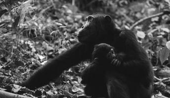 人類総サルの胎児説ってあるじゃん?