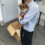『【迷子犬情報】磐田市小立野周辺で茶色のチワワの迷子犬が保護されています→無事飼い主見つかりました』の画像