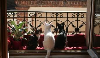 【画像】窓猫の居る風景を置いておきます