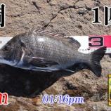 『雨中釣行したポイントでリヴェンジ!周防大島の黒鯛(チヌ)釣り #023』の画像