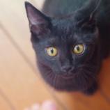 『A Street Cat Named Bobのペーパーバック』の画像