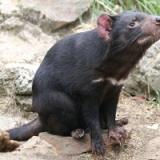 【悲報】オーストラリアさん、絶滅危惧種を保護した結果、とんでもない代償を支払うことになってしまう