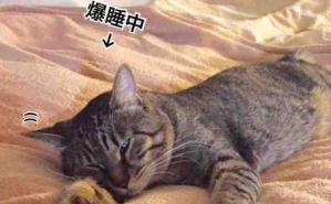"""""""夢の中にいる""""猫を観察すると"""
