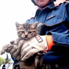 『【話題】ビルのすき間で「ニャー、ニャー」子猫を救出 飼い主探しへ 甲府市』の画像
