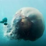 【閲覧注意】化け物、UMA、巨大生物の画像はってけ