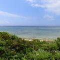 人の数より牛の数が多い八重山の離島 黒島のお勧め観光地
