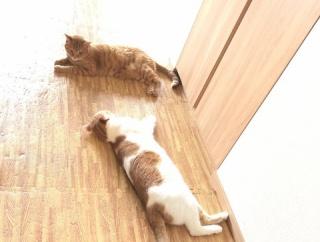毎朝、待ってる猫