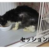 『野良猫ちゃん、里親に迎えられた気持ちって・・・?パート2』の画像