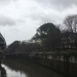 『江戸川橋の桜』の画像